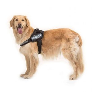 Julius-K9-IDC-Power-Harness-Black-Best-UK-Selling-Harness