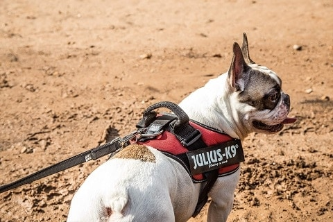 Julius K9 No Pull Harness | Why Using a